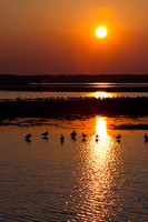 Canada Geese in Blackwater Sunset