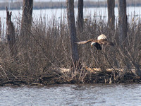 Blackwater Refuge - March 17, 2012